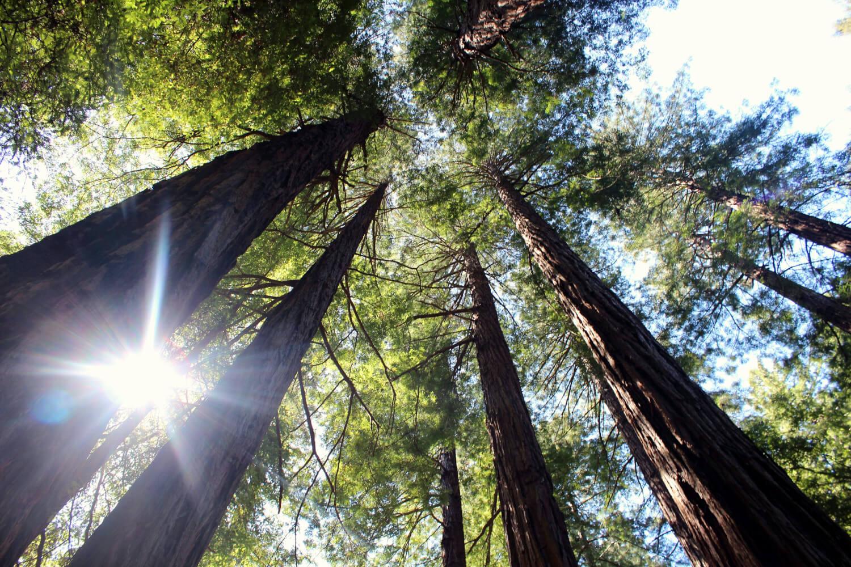 Wald im Sonnenschein